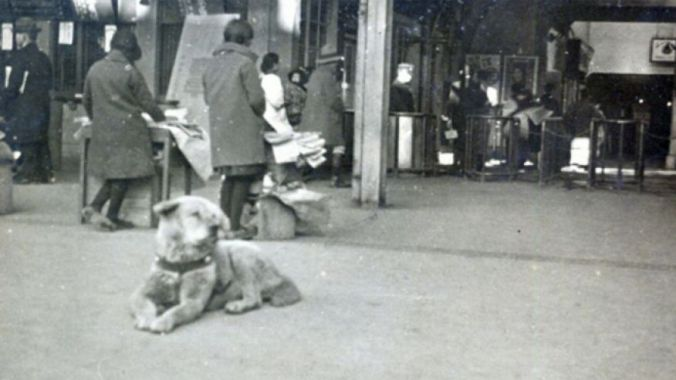 Hachiko waiting on his friends return in 1934
