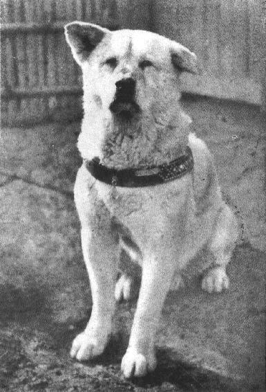 Faithful Hachiko