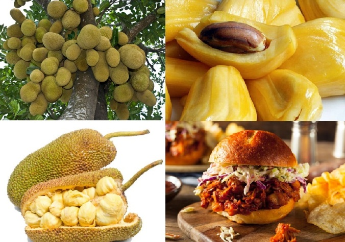 Jackfruit tree, Opened fruit, fleshy pod with internal nut and BBQ stye