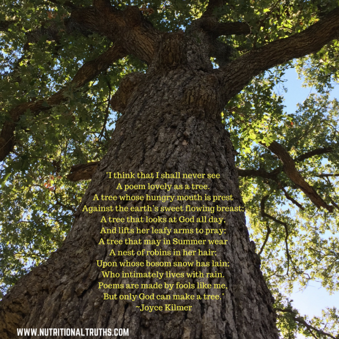 image-http-%2f%2fwww-poetry-archive-com%2fi_pic-gif-think-that-i-shall-never-seea-poem-lovely-as-a-tree-a-tree-whose-hungry-mouth-is-prestagainst-the-earths-sweet-flowing-breast-a-tree-that-looks